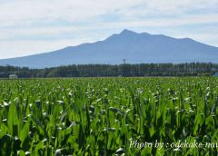 トウキビ畑からの斜里岳