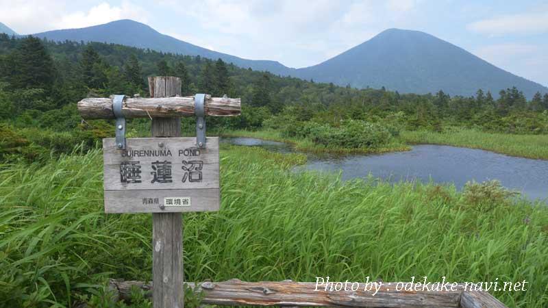 八甲田山の睡蓮沼