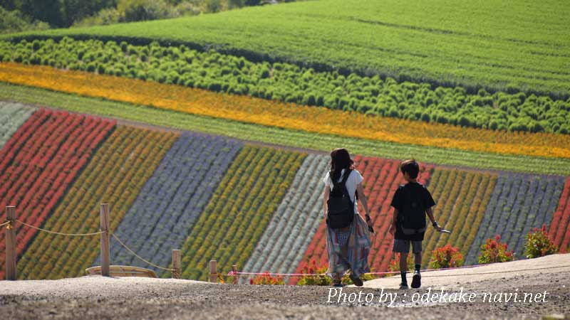 美瑛町の四季彩の丘の花畑前を歩く母子
