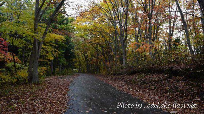 武尊山の紅葉の林道