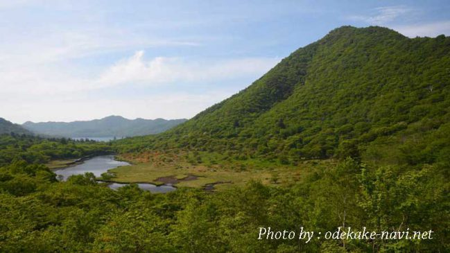 赤城山の覚満淵湿原