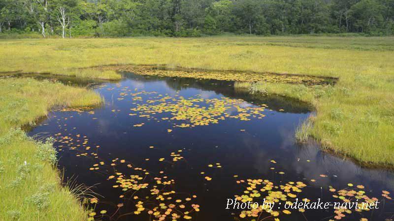 尾瀬ヶ原湿原の池塘