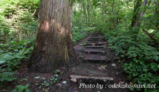 函館山の散策コース・登山道