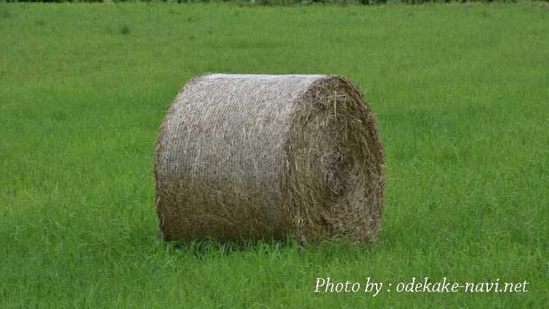 北海道の牧草ロール