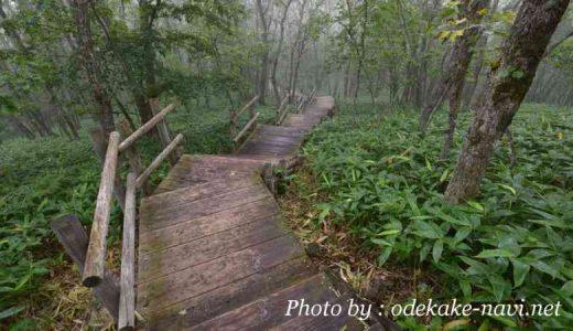 釧路市湿原展望台の木道遊歩道