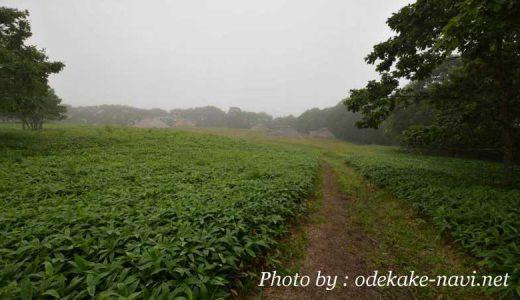 釧路湿原の北斗遺跡への道