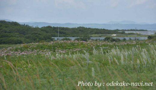 シブノツナイ湖前の原野