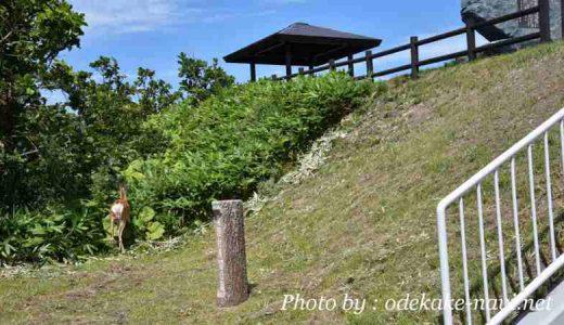 サロマ湖の龍宮台展望台にいたエゾシカ